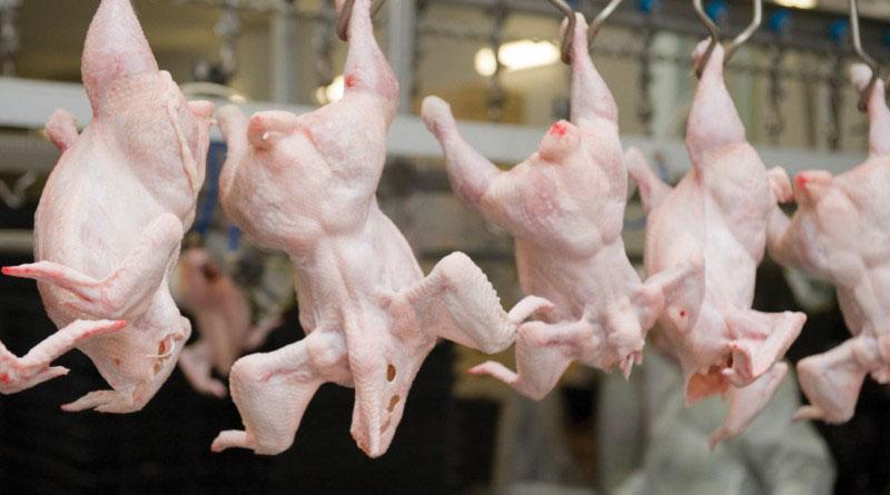 Переработка мяса птицы