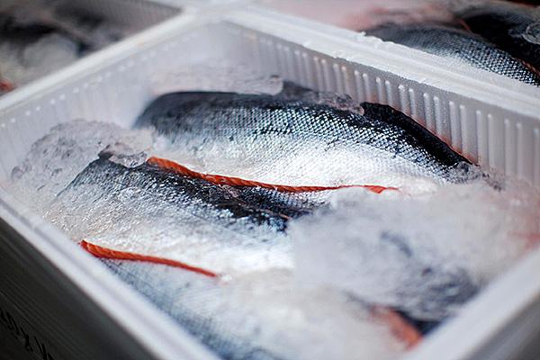 Способы заморозки рыбы